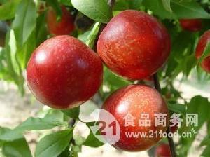 油桃價格  油桃批發價格