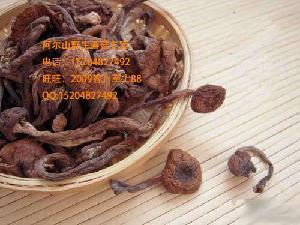 东北阿尔山野生土特产榛蘑野山菌干货